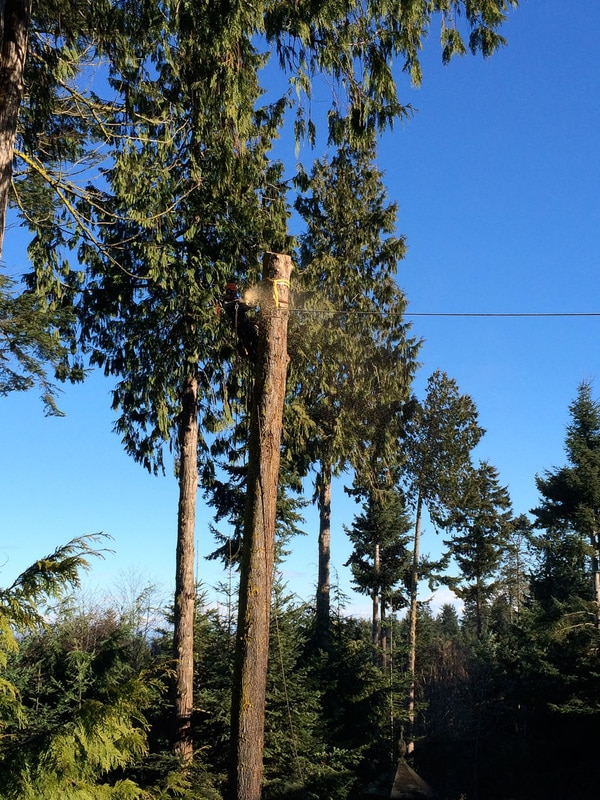 This photo series shows one of many rigging techniques we use to remove trees.