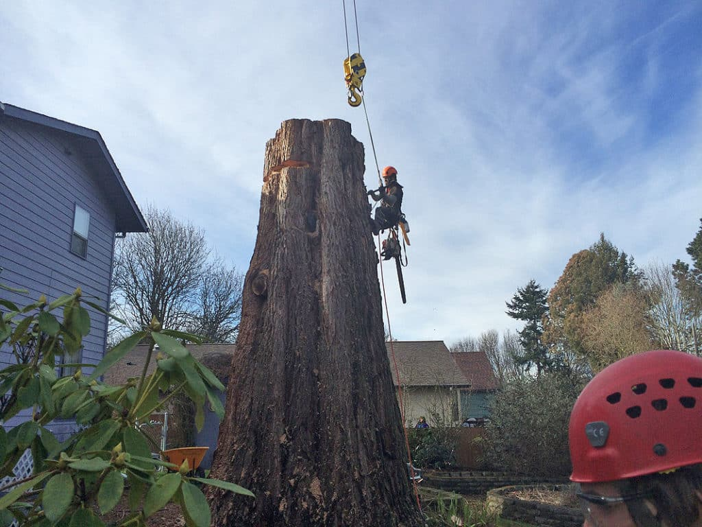 Pictured here - Conor makes adjustments to the cables required to lift the large wood out of the clients yard. This tree removal project required a crane to remove the damaged tree.