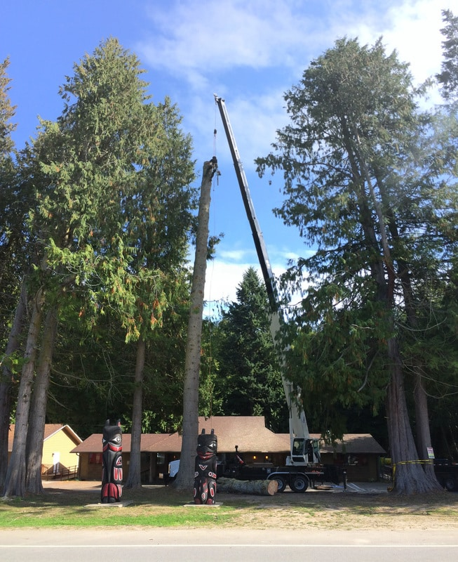 An additional shot of the Elwha Tribe Grand Fir crane removal. The crane was used to expedite the removal process and keep wood in large format (long lengths) for repurposing by the tribe.
