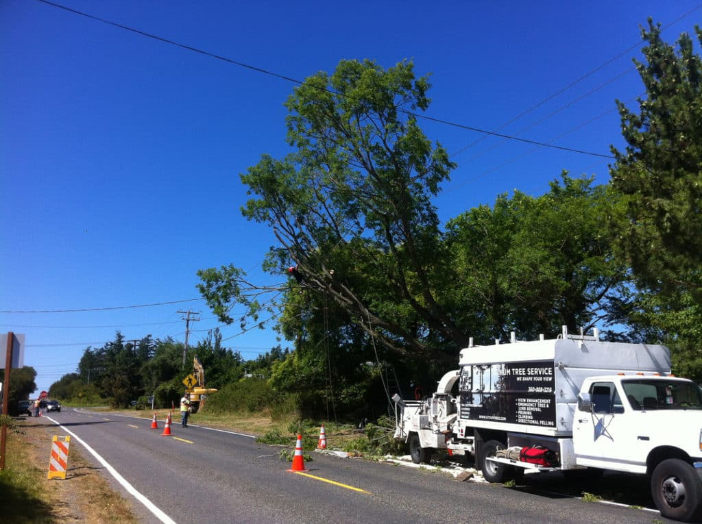 This job was for the City of Port Townsend. This is a heritage Chinese Elm tree that was protected during a road expansion project. We lifted the canopy off the road and reduced the weight of the failure prone limbs.