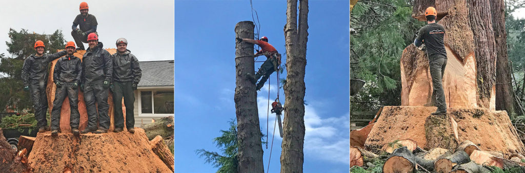 Combination of three images of Sitkum Tree Services Crew and what we do.